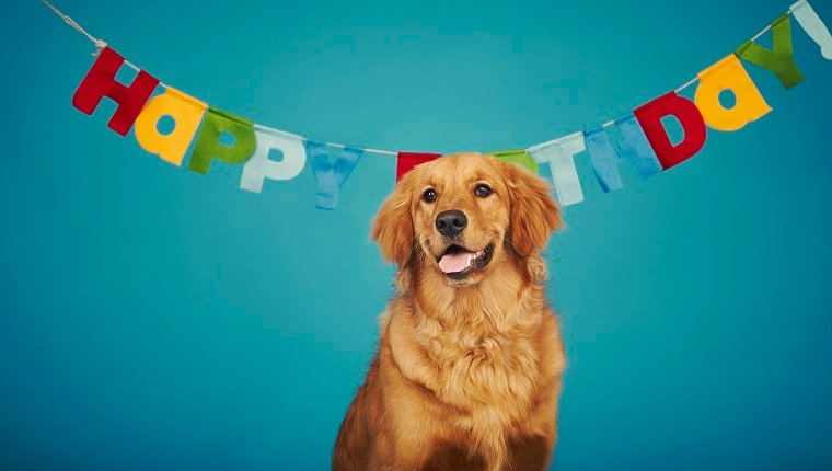 Dog Years: How To Convert Your Dog\'s Age To Human Years - Dogtime