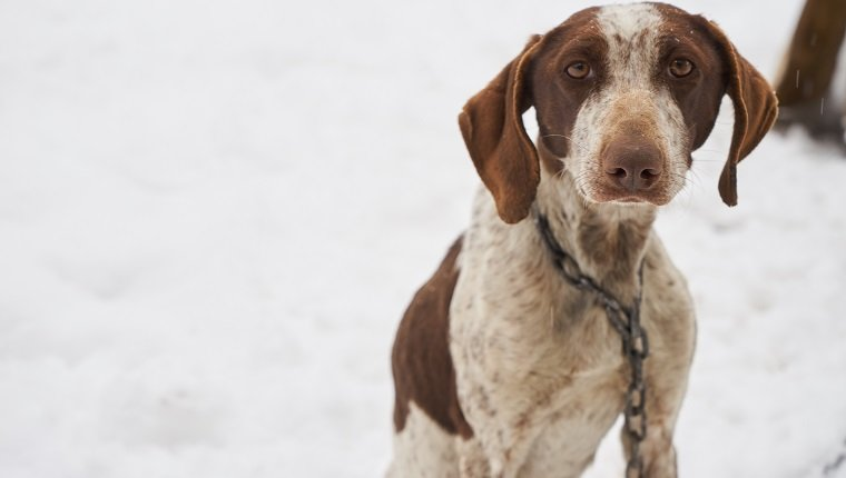Dogs Still Freezing To Death Despite Strict New Laws In 2018