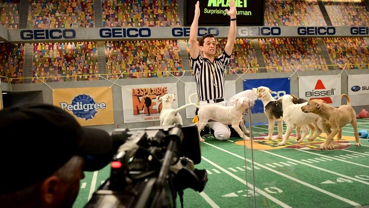 "**Embargoed til 2/5/2013** NEW YORK CITY, NY - NOVEMBER 11: Dan Schachner plays an enthusiastic puppy referee at the taping of Animal Planet's ""Puppy Bowl IX"" program in New York City, NY on November 11, 2012. The mock football game will air as counter programming to the actual superbowl. On the internet, puppy bowl has been a huge sensation and now in it's 9th year. The puppies used in the show are from shelters and rescue organizations from across the country. The kittens in the half time show came from a shelter located in New York City. (Photo by Linda Davidson / The Washington Post via Getty Images)"