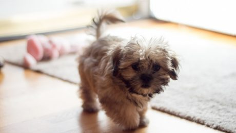 5 Things I Want My Dog To Know About Being The Runt