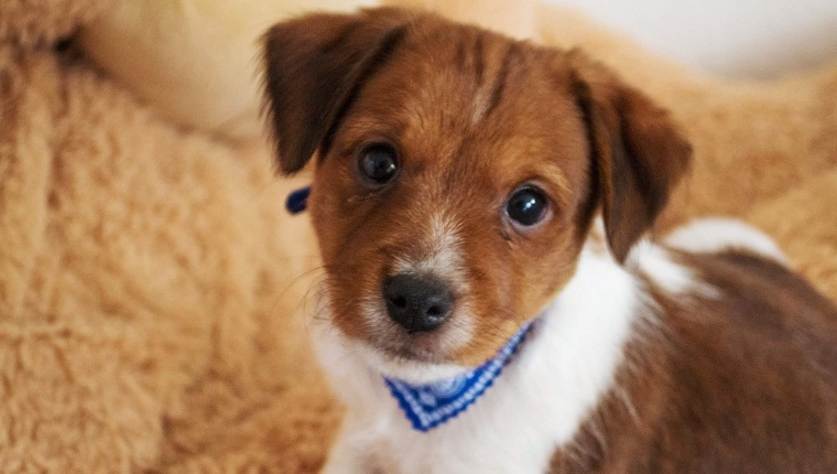 Portrait Of Cute Mixed Breed Puppy
