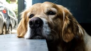 Can Dogs Tell How Long You've Been Gone?