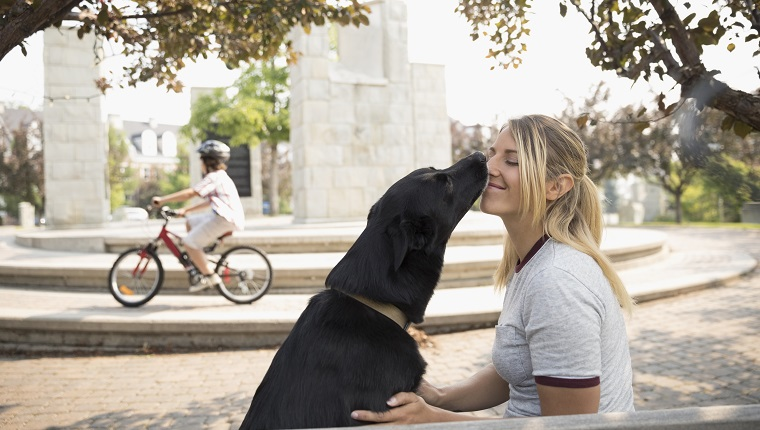 Dog kissing, licking female pet owner in park