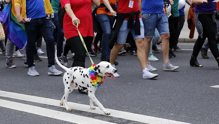 Dog with rainbow collar at Dublin gay pride parade