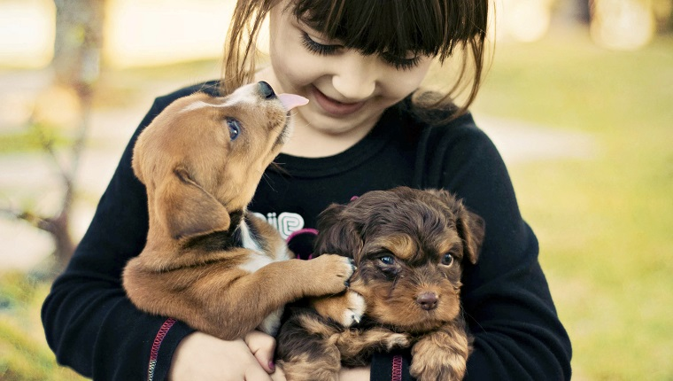 A little girl playing with two cute puppies.