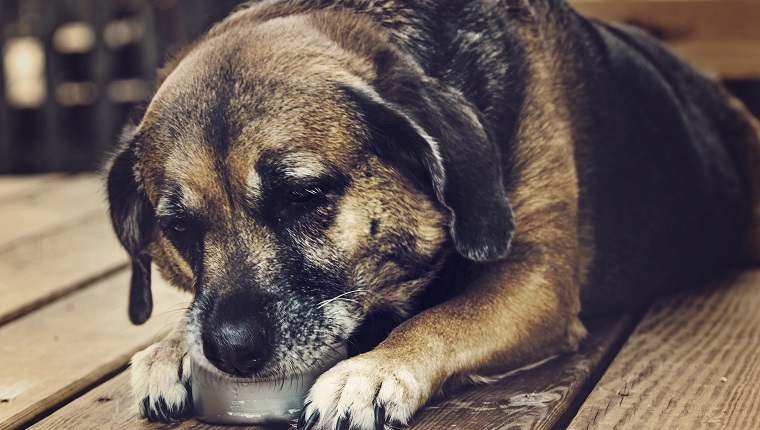 8 Ways To Help A Dog With Dementia - Dogtime