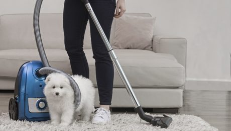 Spring Cleaning Shopping Guide: 12 Items For Dog Owners To Tidy Up