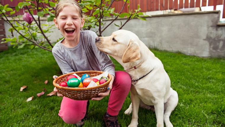 Horizontal image of a 7 years old girl sitting near her golden labrador retriever dog in backyard with a basket full of colorful Easter eggs