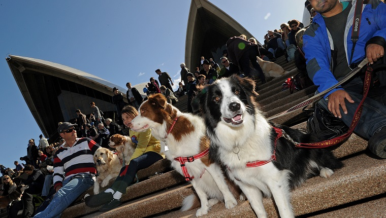 "Dogs and their owners gather on the steps of the Sydney Opera House on June 5, 2010 for a world first ""Music for Dogs"" concert, the brainchild of New York performance artist Laurie Anderson. Almost 1,000 dog-lovers packed onto the Opera House steps and forecourt to treat their beloved pets to the free outdoor event, which is part of the Vivid LIVE arts festival curated by Anderson and rock legend partner Lou Reed. AFP PHOTO / Greg WOOD (Photo credit should read GREG WOOD/AFP/Getty Images)"
