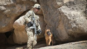 5 K9 Military Dogs That Deserve To Be Honored For K9 Veterans Day