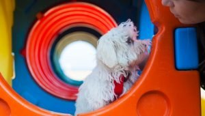 8 Cool Dog Hangout Spaces That You Can Make For Your Pup