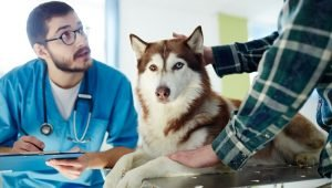 May Is Pet Cancer Awareness Month: Here's What You Should Know