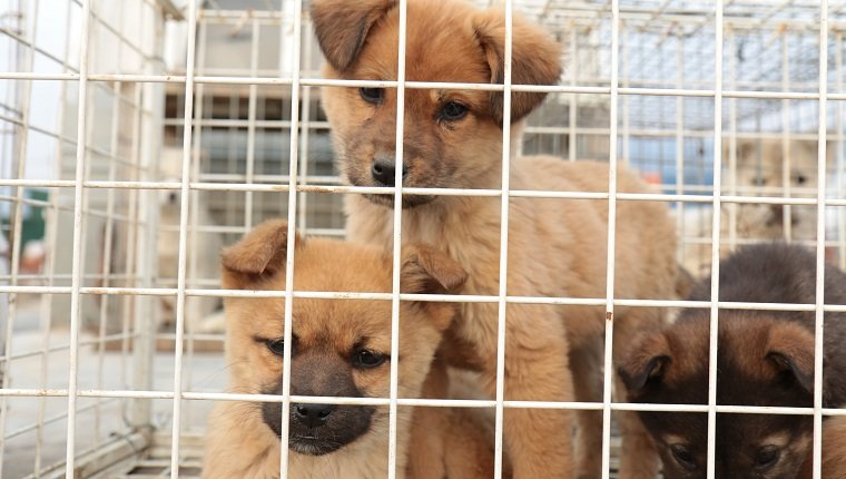 Close-Up Of Puppies In Cage For Sale At Market