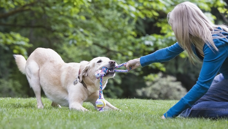 Girl playing tug-of-war with dog