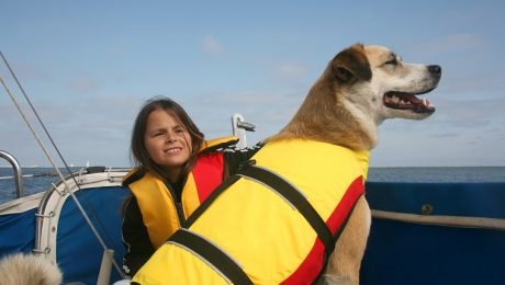7 Safety Tips For Boating With Your Dog