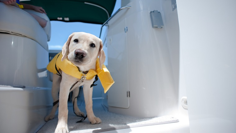 Taking my dog on a boat trip.