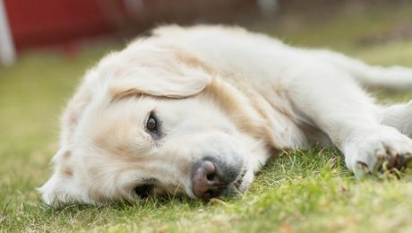 Does Your Dog Need To Be Happy All The Time?