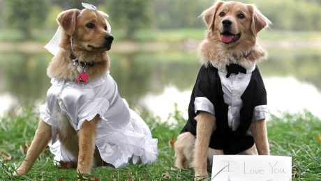 No, I Don't Want To Go To Your Dumb Dog Wedding