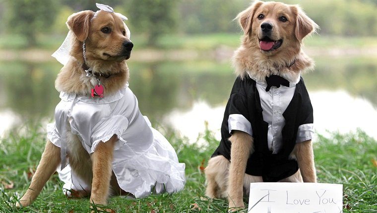 Adorable Bride and Groom Dogs. I love you.