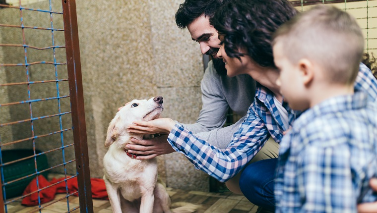 Young and happy family adopting a dog in dog's shelter
