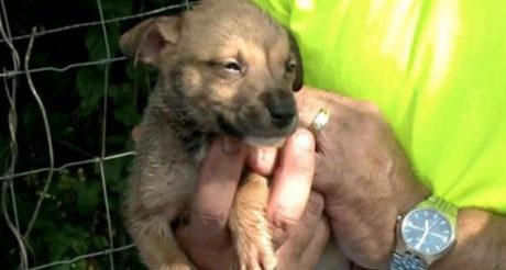 Puppies Left To Die In Plastic Bin In Arkansas SAVED [VIDEO]