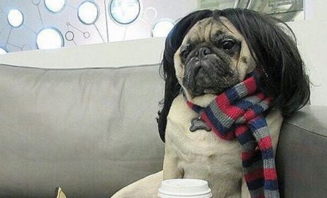 30 Dogs Who Are Ready To Go To Comic-Con [PICTURES]