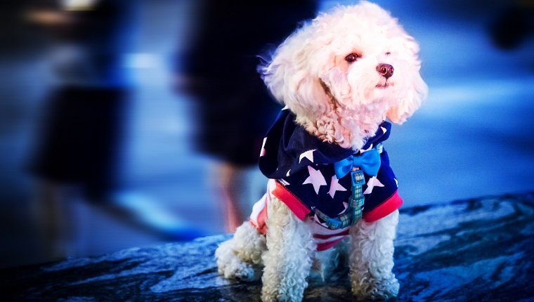 A dog photographed on July 4th along a public right of way.