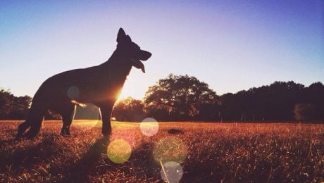 The Dog Days Of Summer: What And When Are They?