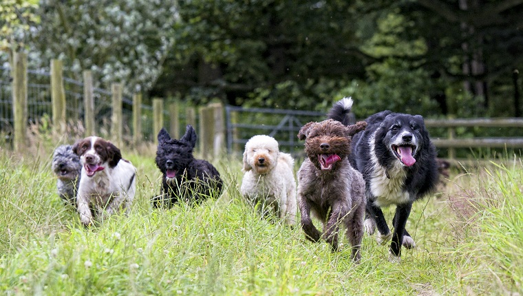 happy smiling dogs...lots of them!