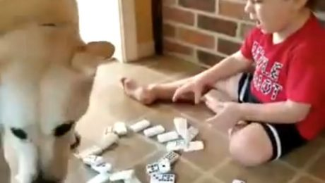 7 Times Dogs Didn't Care About All Your Hard Work [VIDEOS]