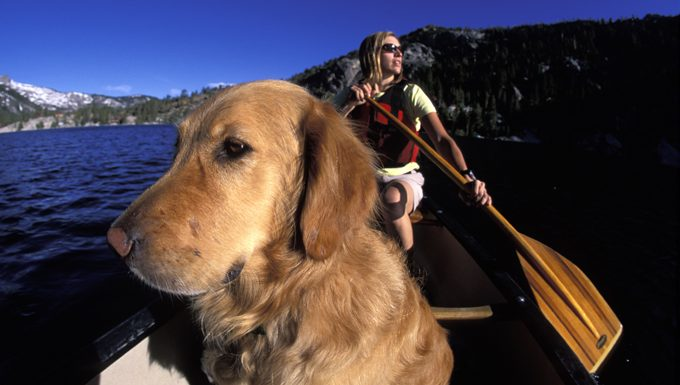 dog with human in a canoe