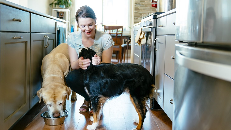 Woman feeding and petting dogs in domestic kitchen