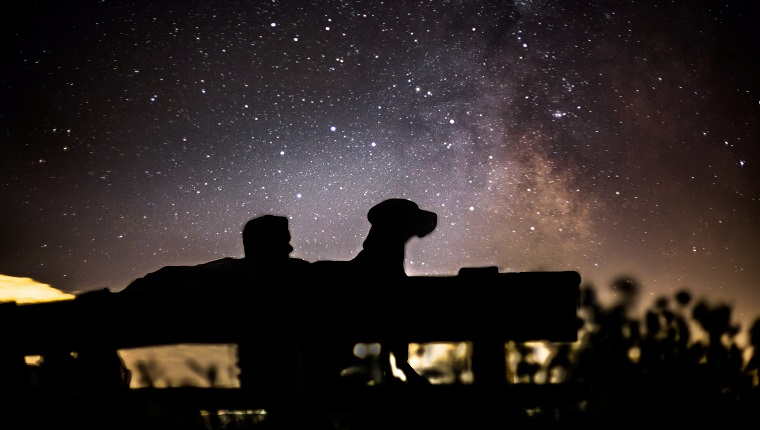 Silhouette Men With Dog Sitting On Bench Against Sky At Night
