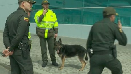 Colombian Drug Cartel Puts $70,000 Hit On Expert Drug-Sniffing Dog