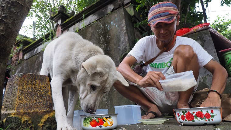 BALI, INDONESIA - FEBRUARY 8: Arif Hendrasto feeds the stray dogs in Ubud streets, Gianyar regency, Bali, on February 8, 2018. Over the past four years, every night, Arif assists his wife to prepare the dog foods made from a mix of rice and chicken's liver and wings. It was made without seasonings to prevent dogs from eating poisoned baits. There are thousands of stray dogs roaming in Bali streets, facing various death threats every day, such as indiscriminate killing, poisoning, brutal bashing, and dog meat trade despite numerous efforts from local government to stop it. Various foundations and volunteers in Bali work to rescue the abandoned dogs and eradicate rabies virus in their area. (Photo by Mahendra Moonstar/Anadolu Agency/Getty Images)