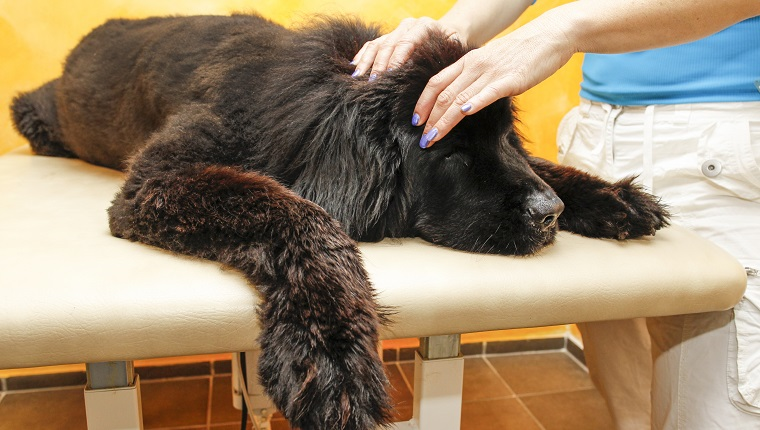 Physical therapy in dogs