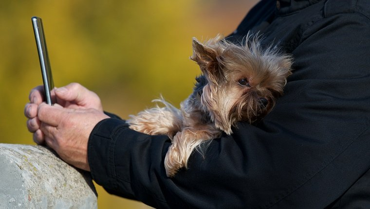 Man taking a selfie with his Yorkshire terrier dog