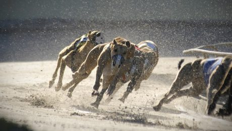 Florida, Where First US Dog Track Opened, May Ban Greyhound Races
