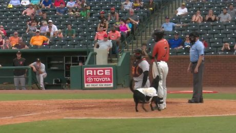Baseball Team's Eager Bat Dog Tries To Steal Player's Bat