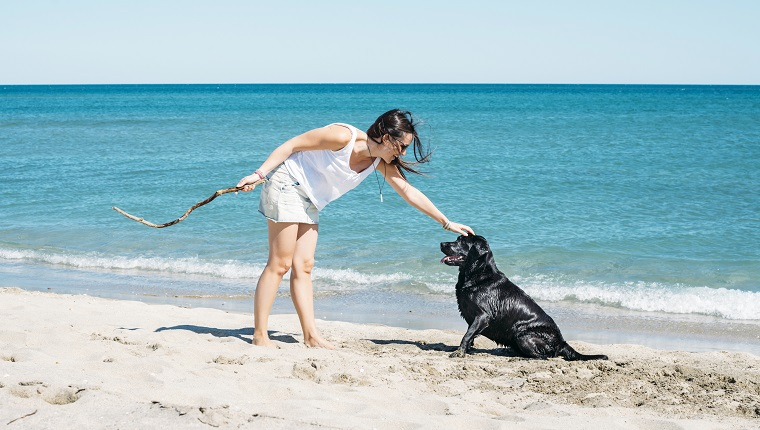 Woman playing with a black dog on the beach in summer. Leucate, Languedoc-Roussillon, Aude, France