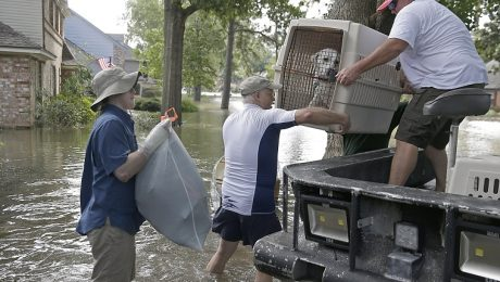 Hurricanes: Preparedness And Evacuation Plan For Dog Owners