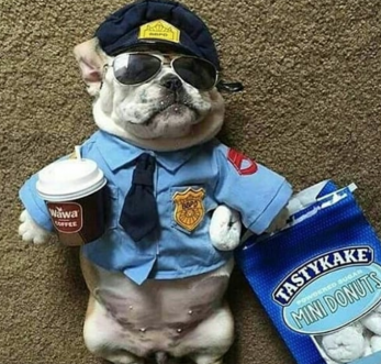 10 Best Halloween Costumes For Small Dogs [PICTURES GALLERY]