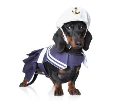10 Best Wiener Dog Costumes For Halloween [PICTURES]