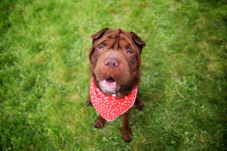 International Bandanna Day: 10 Dogs Wearing Bandannas To Raise Awareness