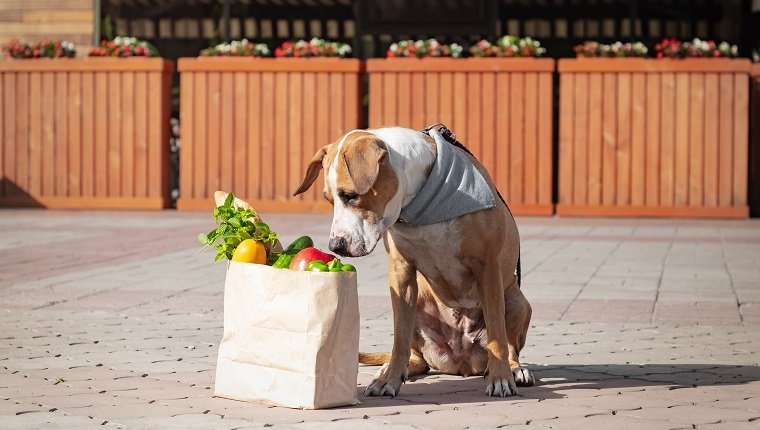 Funny dog and bag of groceries in front of market or local store. Cute staffordshire terrier puppy in bandana sits next to paper bag with greens and vegetables, shopping for food lifestyle concept.