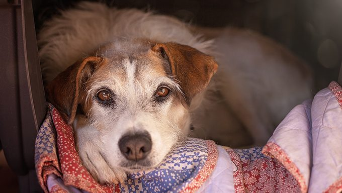 shelter dog lying on blanket