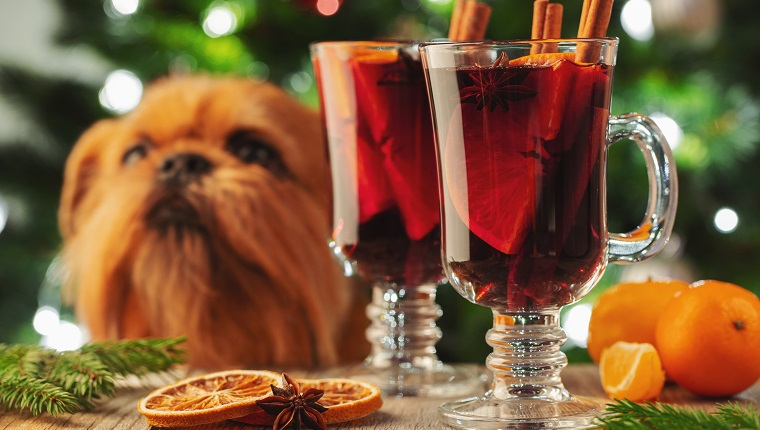 Two glass of christmas mulled wine or gluhwein with spices and orange slices on rustic table against the Christmas tree and red dog. Traditional drink on winter holiday.