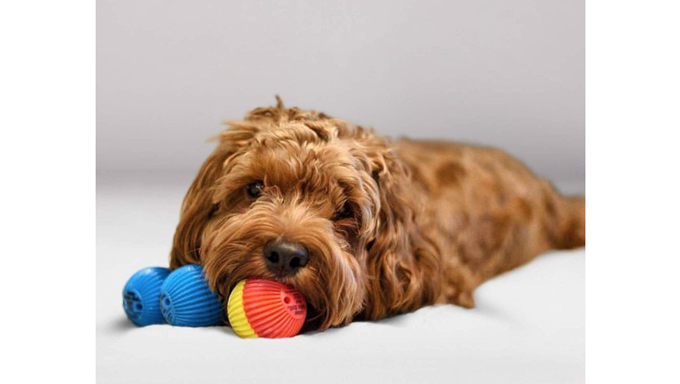 dog with babble ball toys