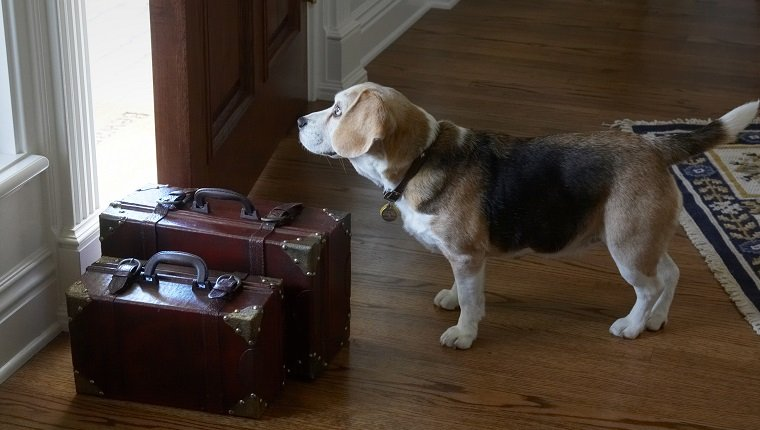 Leaving home - antique red brown leather suitcases on wood floor with front door ajar