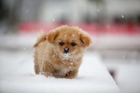 10 Adorable Puppies Playing In Their First Snow [PICTURES]
